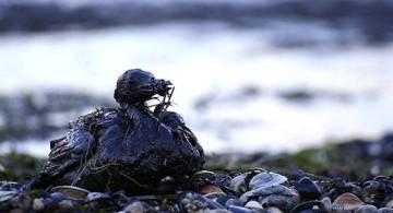 Noruega-ayudará-a-controlar-el-derrame-de-petróleo-en-el-Golfo-de-México