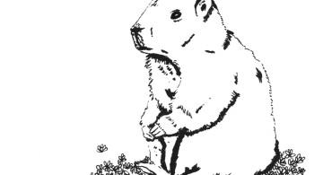 Adios marmota