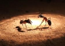 hormigas065