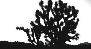 YOSHUA TREE-ENERO 2013 (182 of 193)