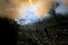 Operativo Militar en la sierra. Se decomisaron 160 toneladas de marihuana con un precio de 6,000 pesos el kilo puesto en la frontera con Estados Unidos.