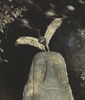 Cercophitecus Icarocornu, 1985, de la serie Fauna.